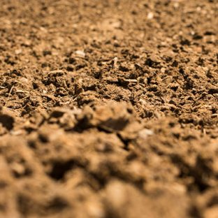 wcfs_research_images_soil